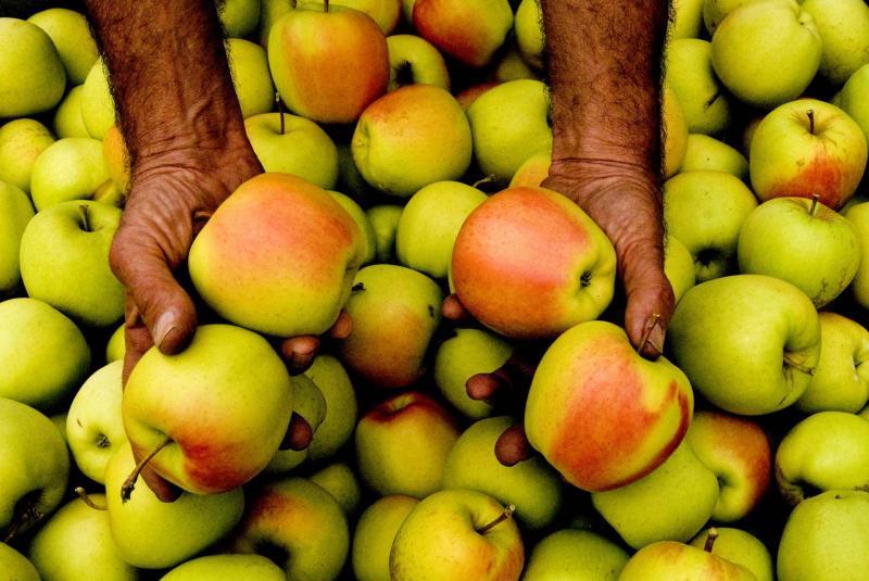 Le mele della Val di Non